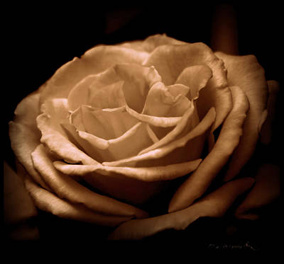 Photograph - Warm Desires by Jeanette C Landstrom