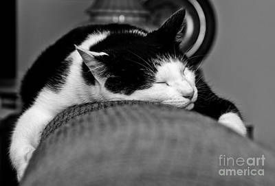 Photograph - Warm Kitty by Cheryl Baxter