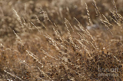 Photograph - Warm Light On A Winter's Day by Dee Cresswell