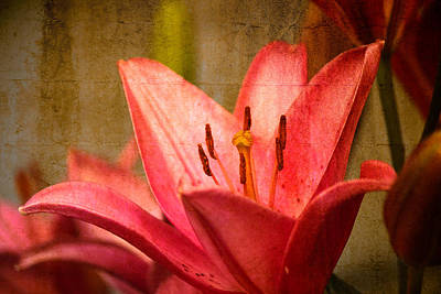 Photograph - Warm Love by Connie Dye