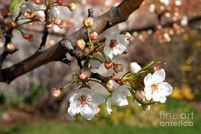 Spring Scenes Photograph - Warm Spring Canvas by Carol Groenen