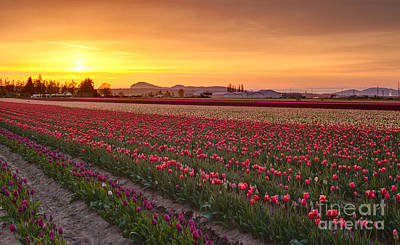 Skagit Photograph - Warm Spring Evening by Mike Reid