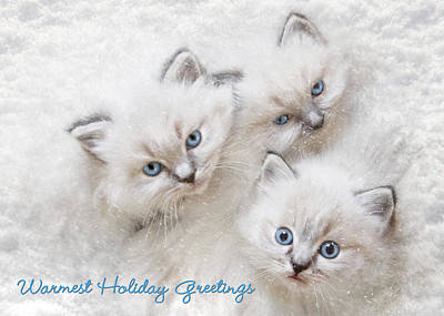 Rag Doll Photograph - Warmest Holiday Greetings by Lori Deiter