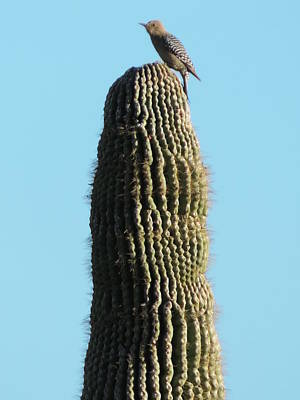 Photograph - Warming In The Desert Sun by Bill Tomsa