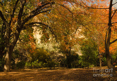 Photograph - Warmth Of Autumn by Tamara Becker
