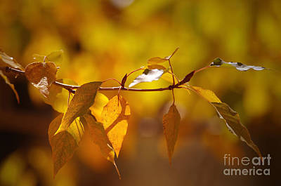 Photograph - Warmth Of The Autumn Sun by Sharon Talson