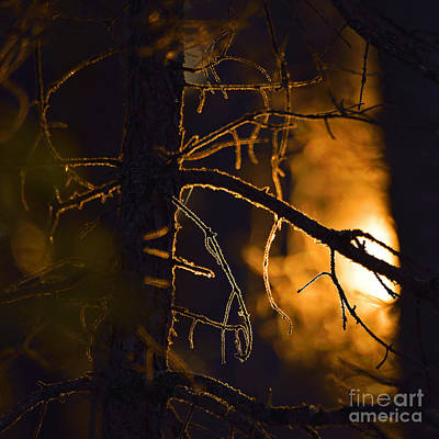 Photograph - Warmth Of The Woods by Joshua McCullough