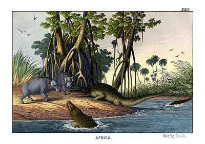 Crocodile Drawing - Warthog Crocodile by Splendid Art Prints
