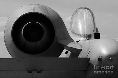 Photograph - Warthog Detail by Tom Brickhouse