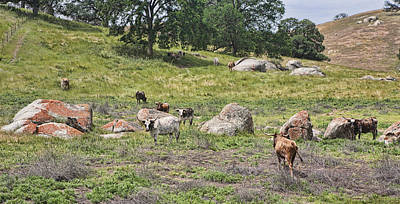 Photograph - Wary Longhorn Cows by Gregory Scott