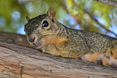 Photograph - Wary Squirrel by Allen Sheffield
