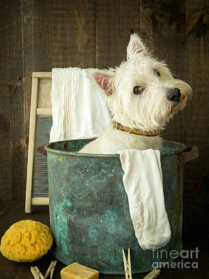 Cute Puppy Photograph - Wash Day by Edward Fielding