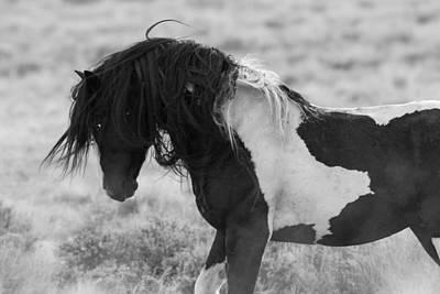White Stallion Photograph - Washakie's Return by Sandy Sisti