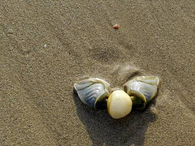 South Africa Photograph - Washed Up by Leana De Villiers