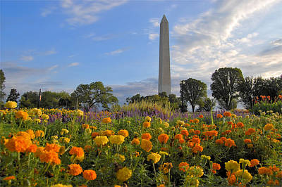 Washimgtom Monument In Spring Art Print by Michael Donahue