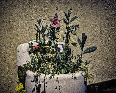 Photograph - Washing Machine Planter by Ron Roberts