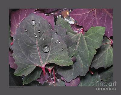Photograph - Washing Purple Orach by Patricia Overmoyer
