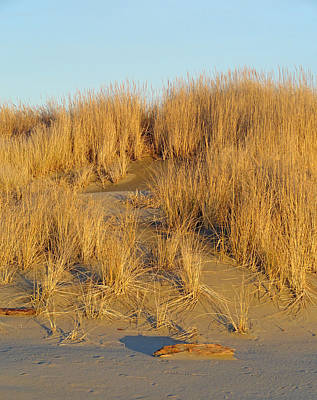 Photograph - Washington Beach Sand Dune by Robert Meyers-Lussier