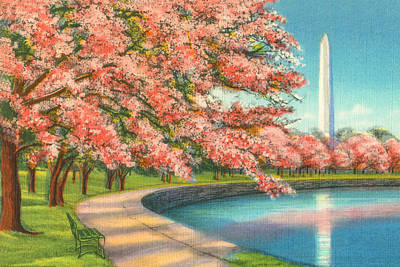 Cherry Blossoms Painting - Washington D.c. by Alan Paul