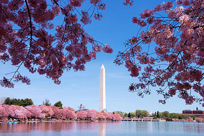Photograph - Washington Dc Cherry Blossom by Songquan Deng