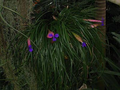 Botanic Photograph - Washington Dc - Us Botanic Garden. - 121226 by DC Photographer