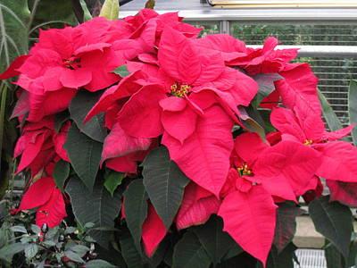 Flowers Photograph - Washington Dc - Us Botanic Garden. - 12129 by DC Photographer