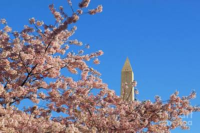 Photograph - Washington Monument And Cherry Blossoms by Willie Harper