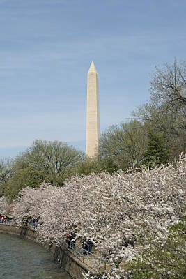 Blooming Photograph - Washington Monument - Cherry Blossoms - Washington Dc - 011311 by DC Photographer