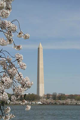 Blooming Photograph - Washington Monument - Cherry Blossoms - Washington Dc - 011315 by DC Photographer