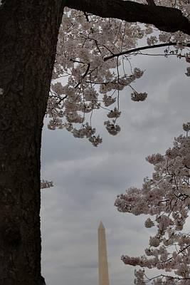 Washington Monument - Cherry Blossoms - Washington Dc - 011322 Art Print by DC Photographer