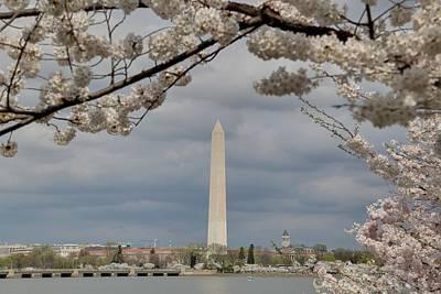 Washington Monument - Cherry Blossoms - Washington Dc - 011325 Print by DC Photographer