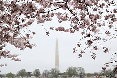 Tidal Photograph - Washington Monument - Cherry Blossoms - Washington Dc - 011340 by DC Photographer