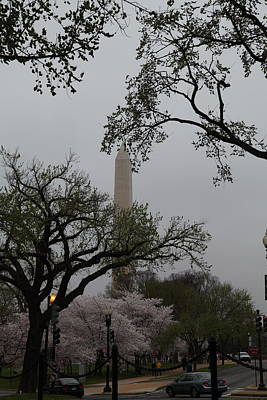 Springtime Photograph - Washington Monument - Cherry Blossoms - Washington Dc - 011345 by DC Photographer