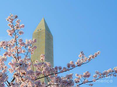 Photograph - Washington Monument With Blossoms by Jeff at JSJ Photography