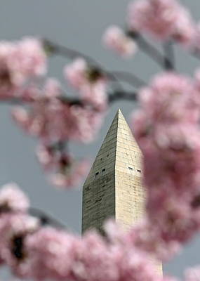 Photograph - Washington Monument With Cherry Blossoms by Karen Saunders
