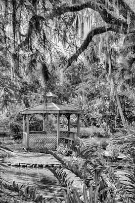 Photograph - Washington Oaks by Howard Salmon