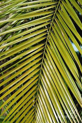 Colored Pencils - Washington Palm tree by Luis Alvarenga