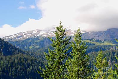 Photograph - Washington Paradise. Mt. Rainier National Park by Connie Fox