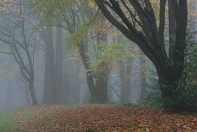 Photograph - Washington Park Fog 2 by Ken Dietz