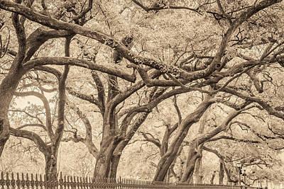 Photograph - Washington Square Live Oaks by Scott Rackers