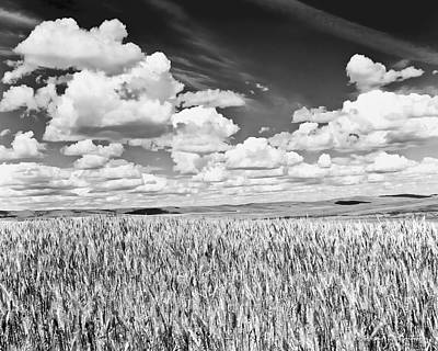 Photograph - Washington Wheat by David Simmer
