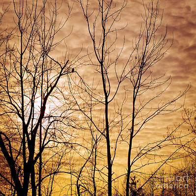 Washington's Winter Sky Art Print