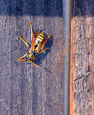Photograph - Wasp 5 by Brent Dolliver