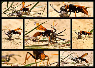 Photograph - Wasp And His Kill by Miroslava Jurcik