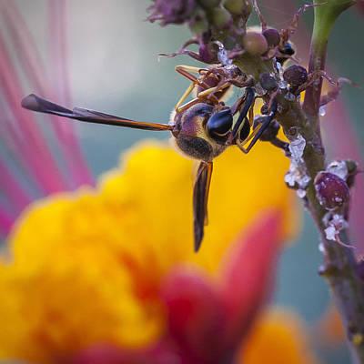 Wasp Gathering Nectar Original by David Wagner