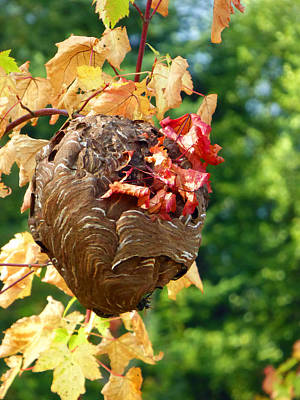 Photograph - Wasp Nest 4 by Laurie Tsemak