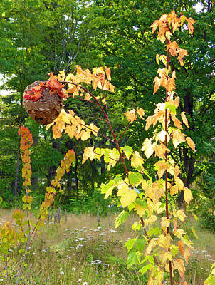 Photograph - Wasp Nest 5 by Laurie Tsemak