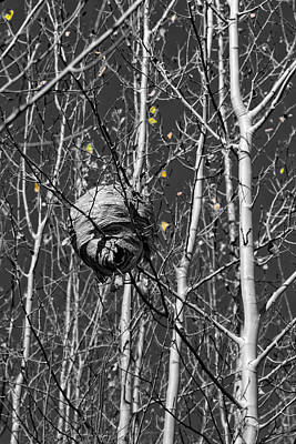 Photograph - Wasp Nest In Aspen by Kathleen Bishop
