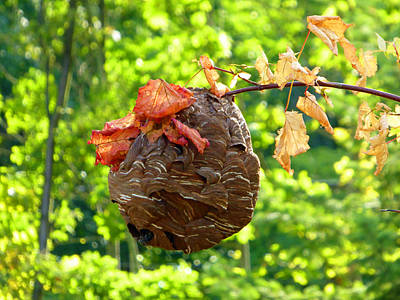 Photograph - Wasp Nest by Laurie Tsemak
