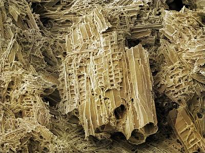 Wasp Nest Photograph - Wasp Nest Material (sem) by Science Photo Library